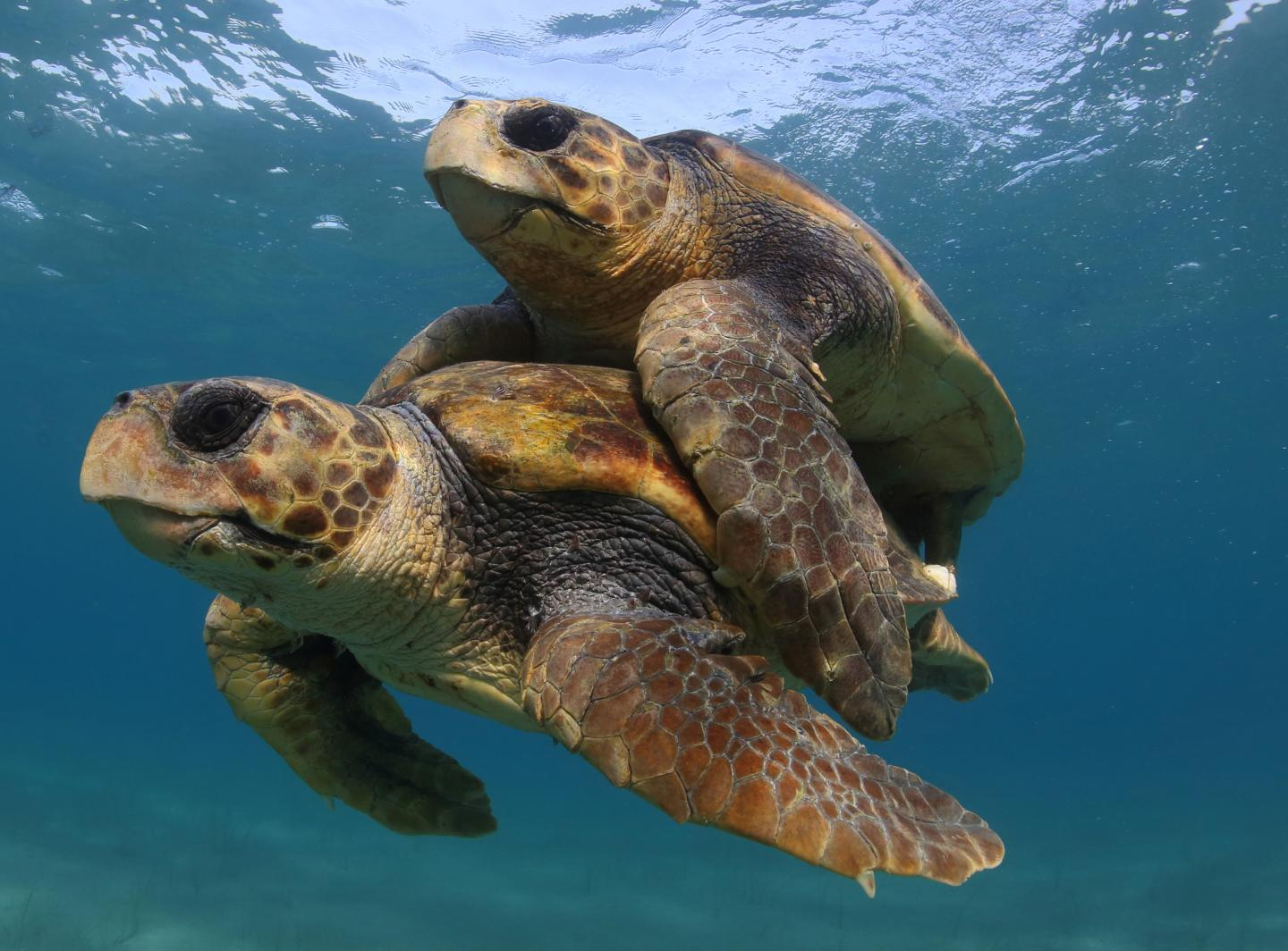 """Efforts to Save Sea Turtles are a """"Global Conservation Success Story"""""""