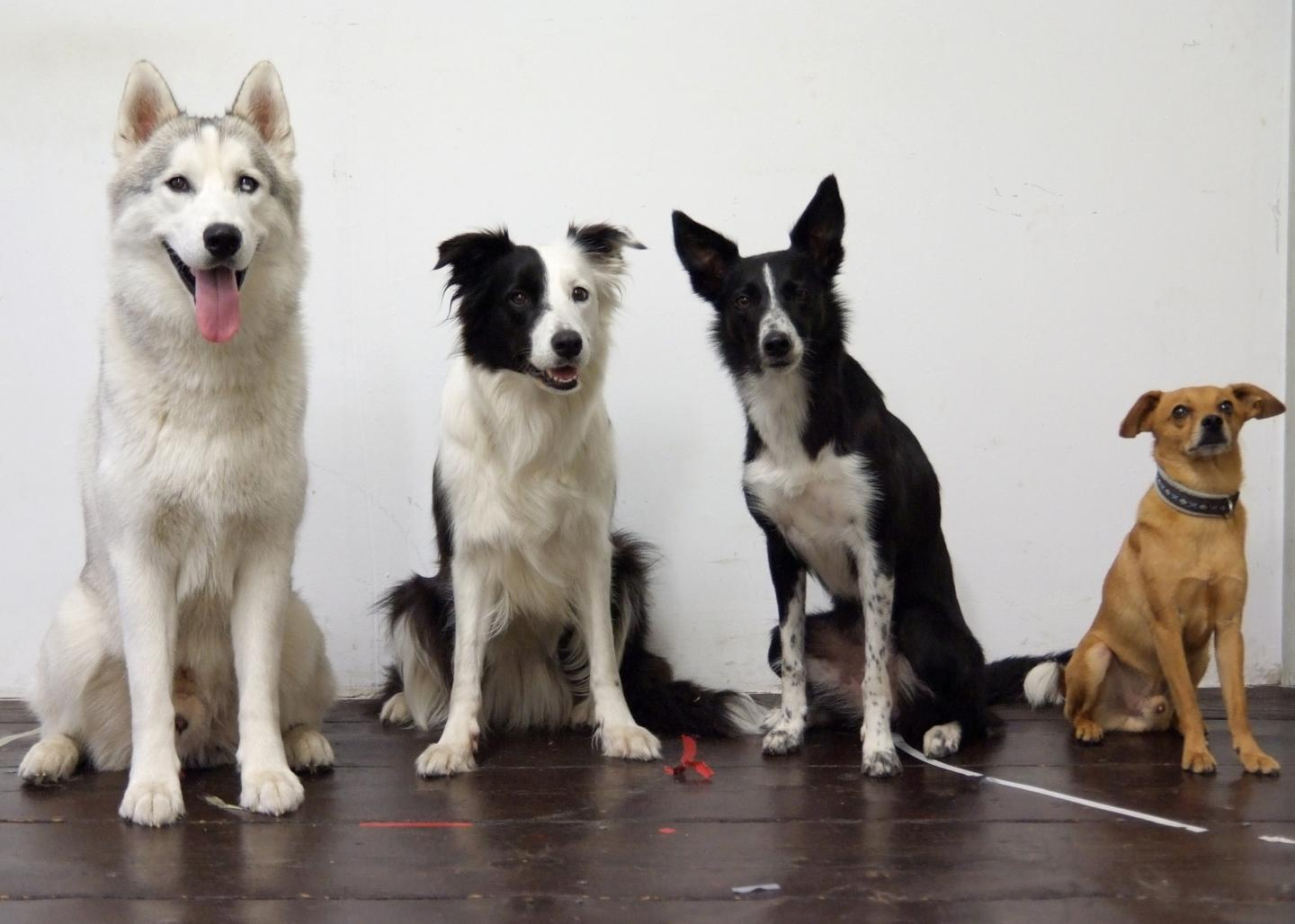 Dogs Lost Their Ability to Discriminate Quantities