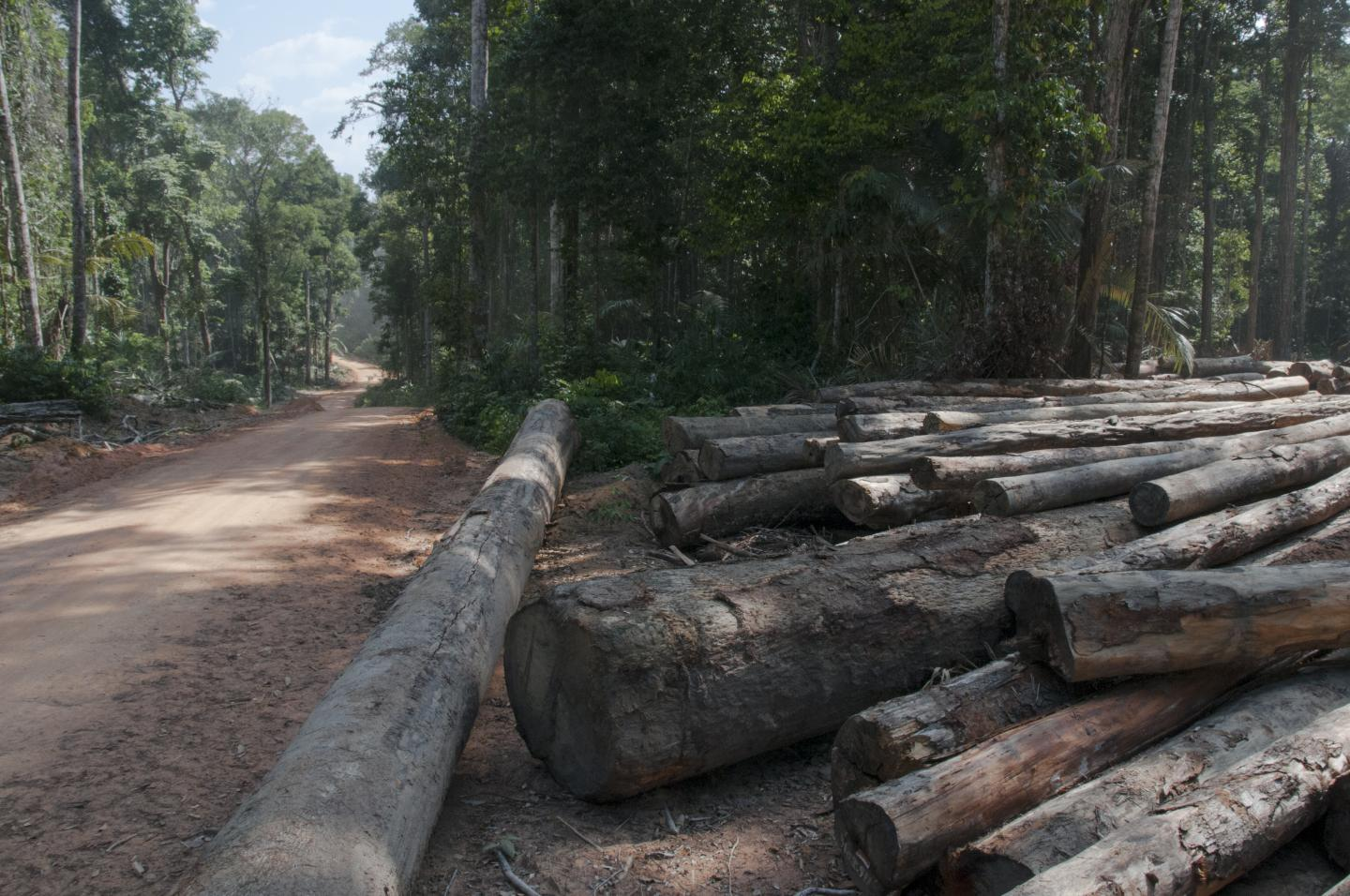 An RIL-Certified Forest Operation in Guyana