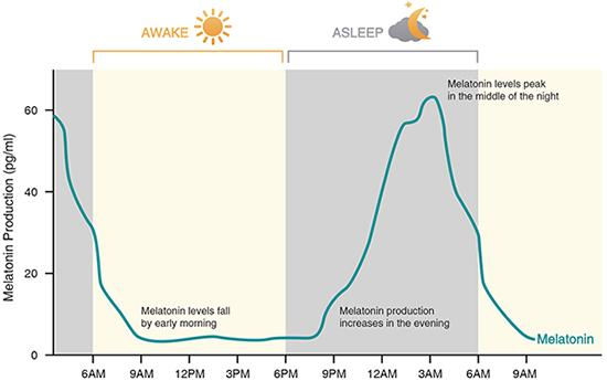 Changes in Melatonin Secretion during Day and Night Time