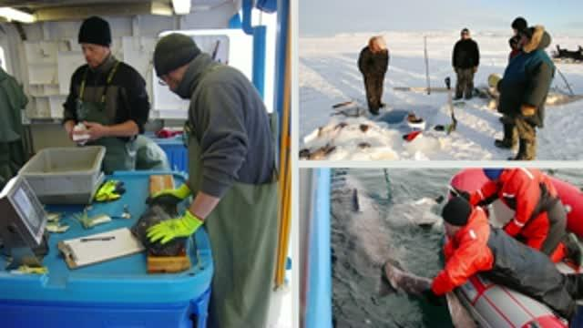 Working With Arctic Communities for a Changing World: Aaron Fisk Named 2015 Pew Marine Fellow