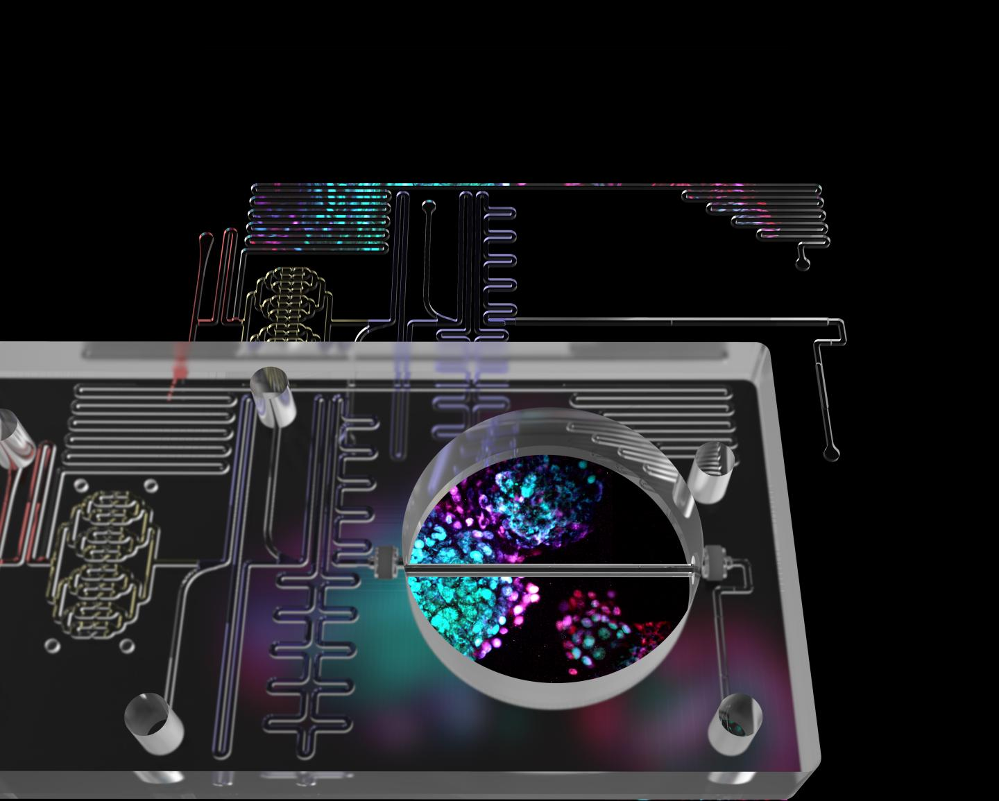 """A Fully Integrated, Thermoplastic """"Islet on a Chip"""""""