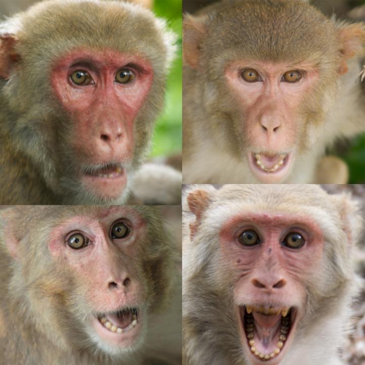 Monkey Collage