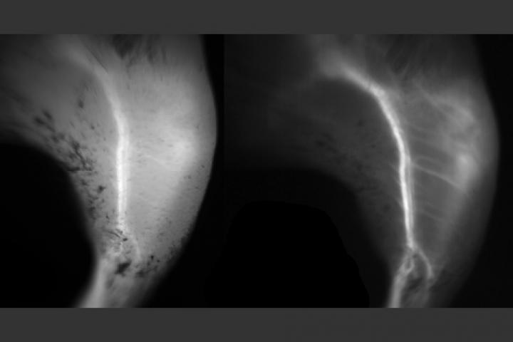Fluorescent Dye Could Enable Sharper Biological Imaging