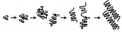 A Model of Huntingtin Aggregation