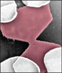 Graphene Nanoconstriction