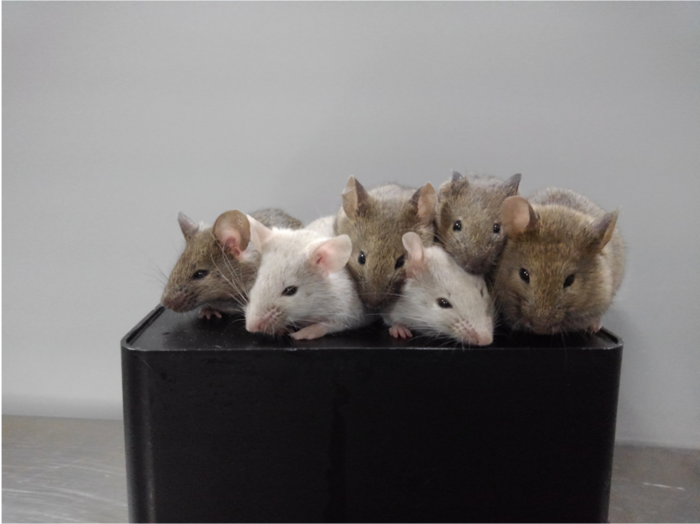 Viable mice from stem cells