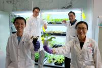 NTU Singapore scientists develop device to 'communicate' with plants using electrical signals