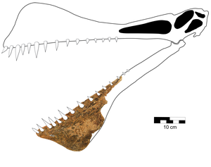 Reconstruction of the skull of Thapunngaka shawi