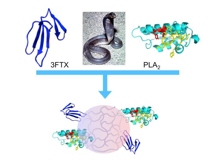 Nanoparticles to Treat Snakebites