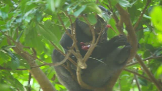 Study Documents African Monkeys Eating Bats
