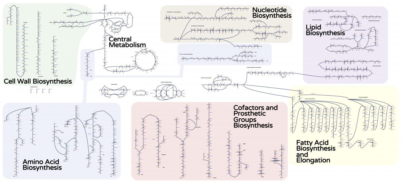 Metabolic Process