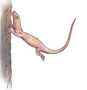 A gecko crash-landing on a tree trunk