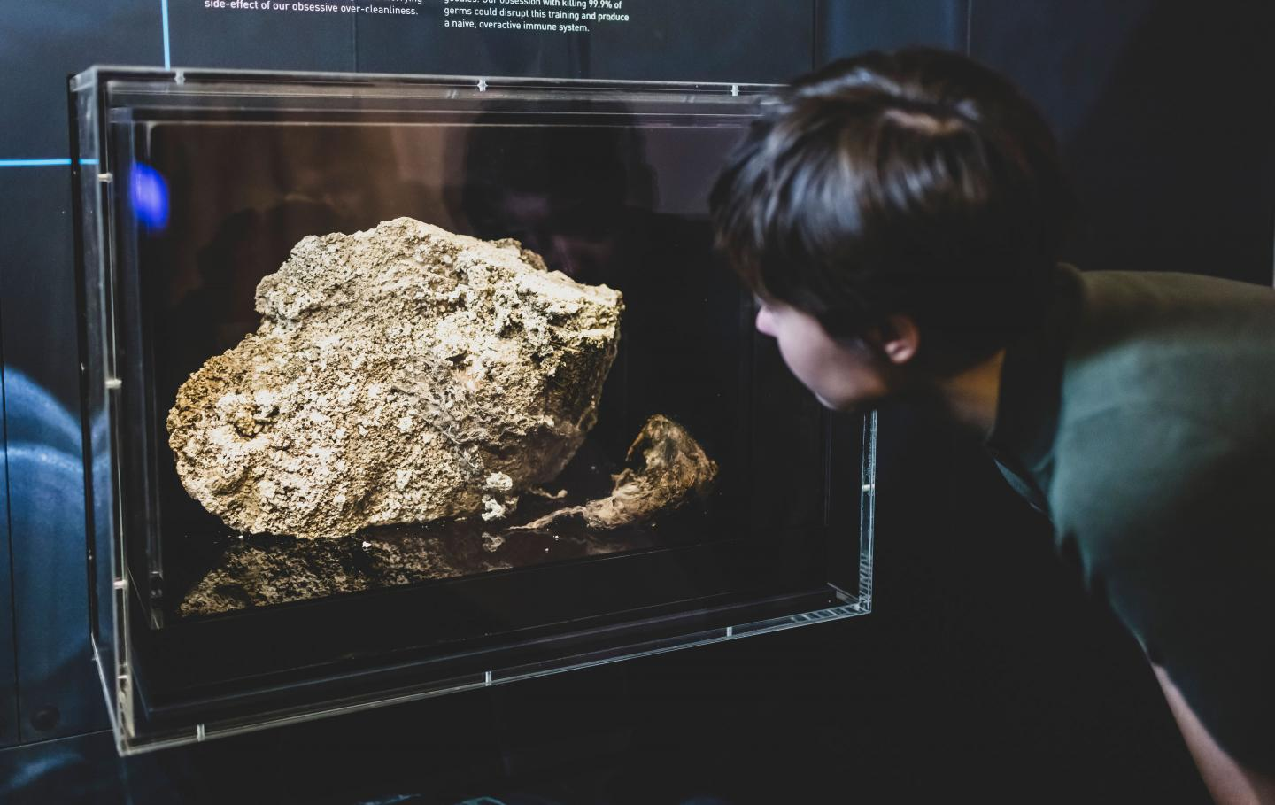 Fatberg on display in the Melbourne Museum