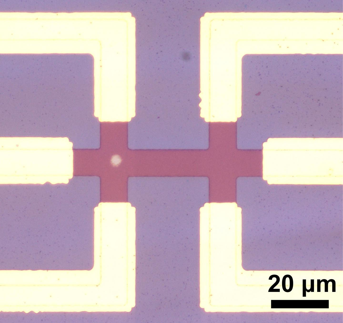 Microscope Image Without Numbers and Axis