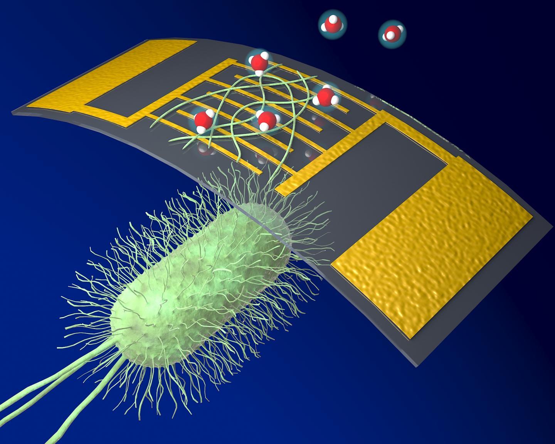 A new, highly sensitive chemical sensor using organic nanowires