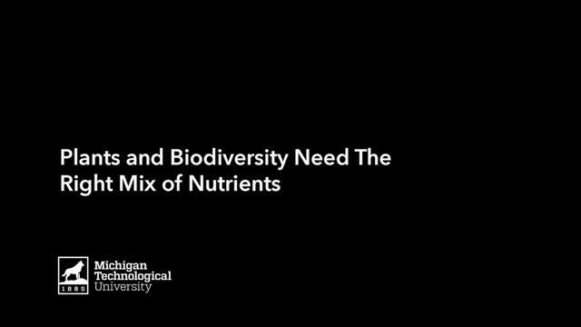 Plants and Biodiversity Need the Right Mix of Nutrients