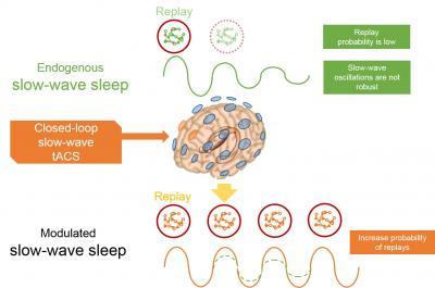 Stimulation Boosts Memory Consolidation
