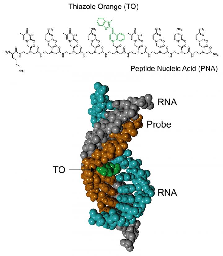 New Analytical Tool for Fluorescence Detection of Double-Stranded RNA