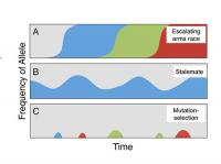 Scenarios for the Evolutionary Dynamics of Cheating Behaviors