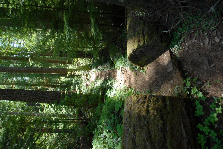 Oregon Old Growth