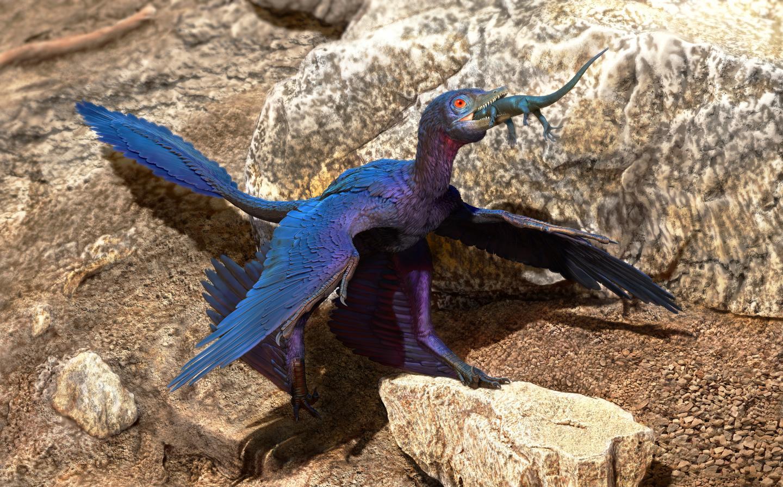 Illustration of the Lizard-Swallowing Microraptor