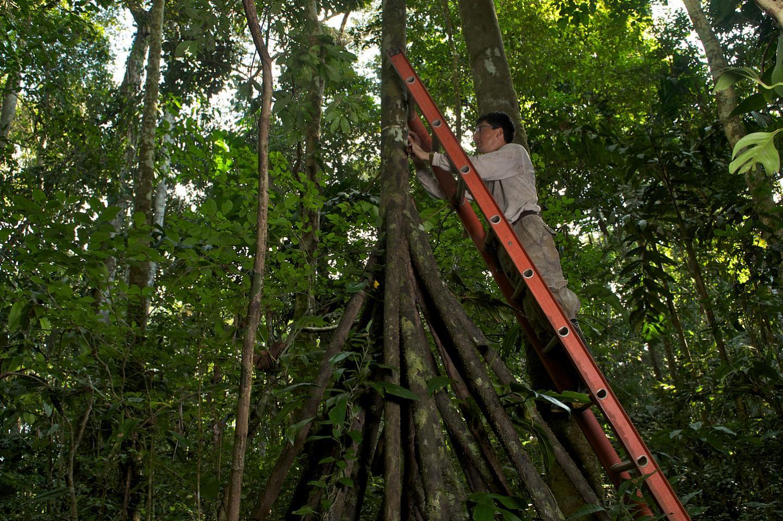 Researchers Measure the Trees Diameters across Brazil, Peru and Bolivia