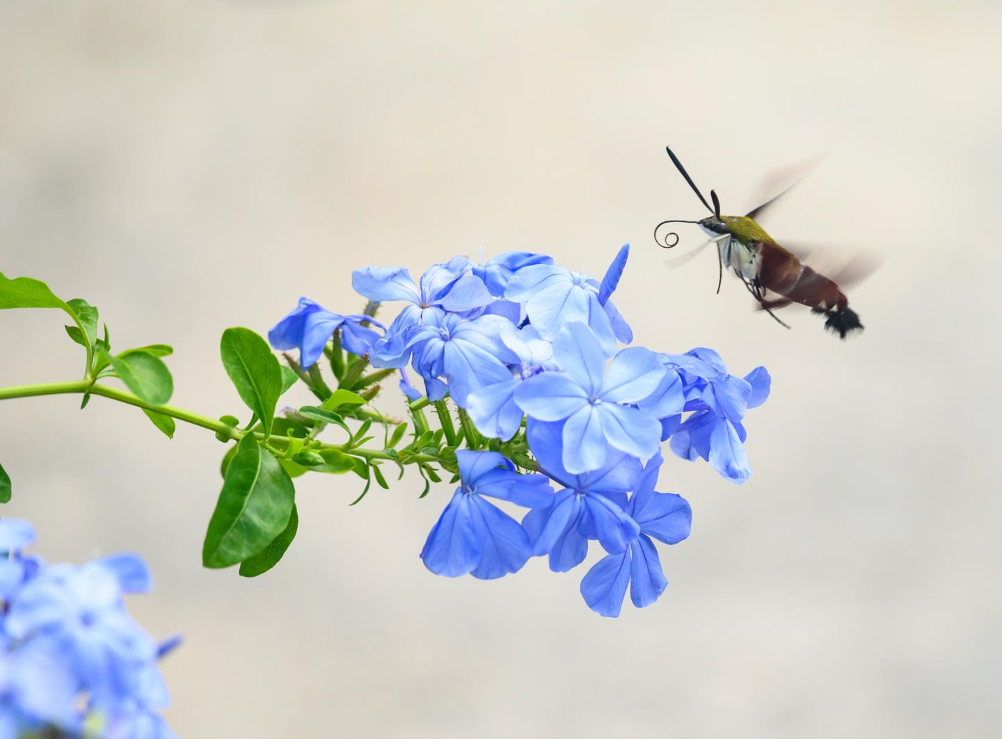 Scientists Outline Simple Ways of Protecting Insects