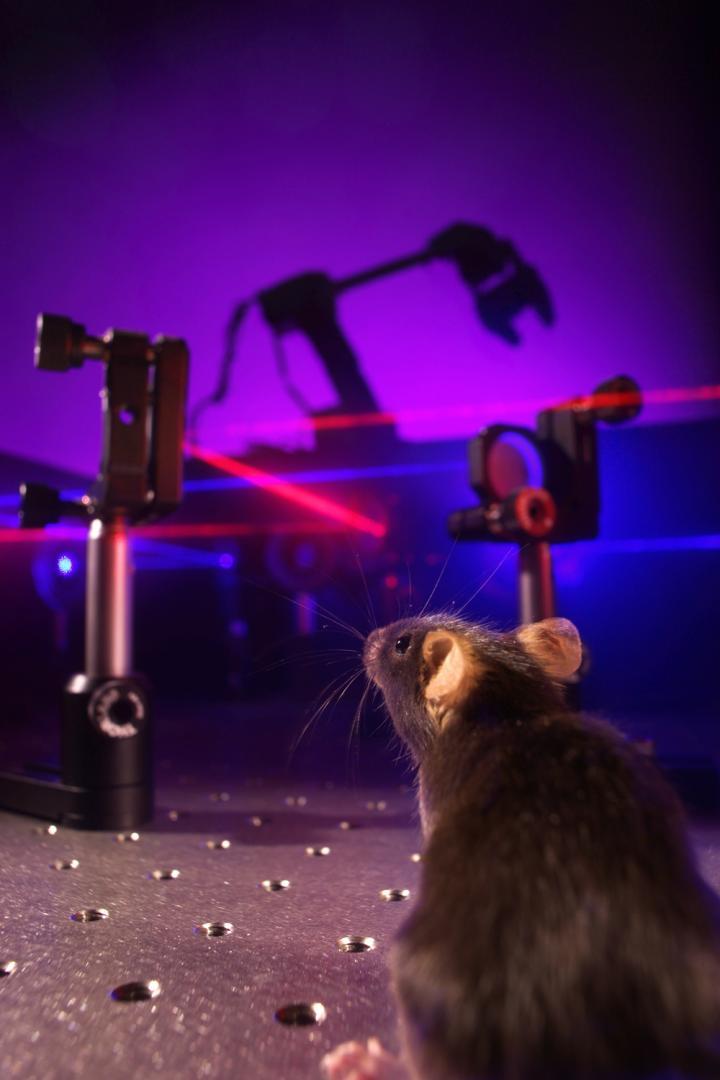 A Novel Optical Brain-Machine Interface