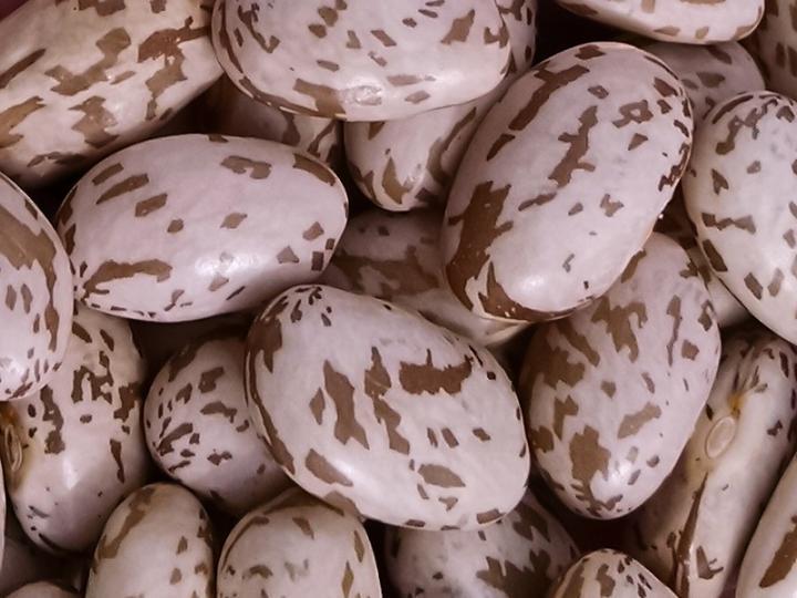 Keeping pinto beans away from the dark side | EurekAlert!