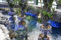 Sea Seed aquarium