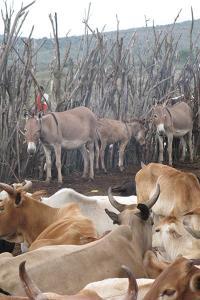 Marshall Maasai Settlement Corral
