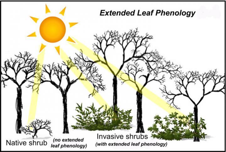 Forest Schematic