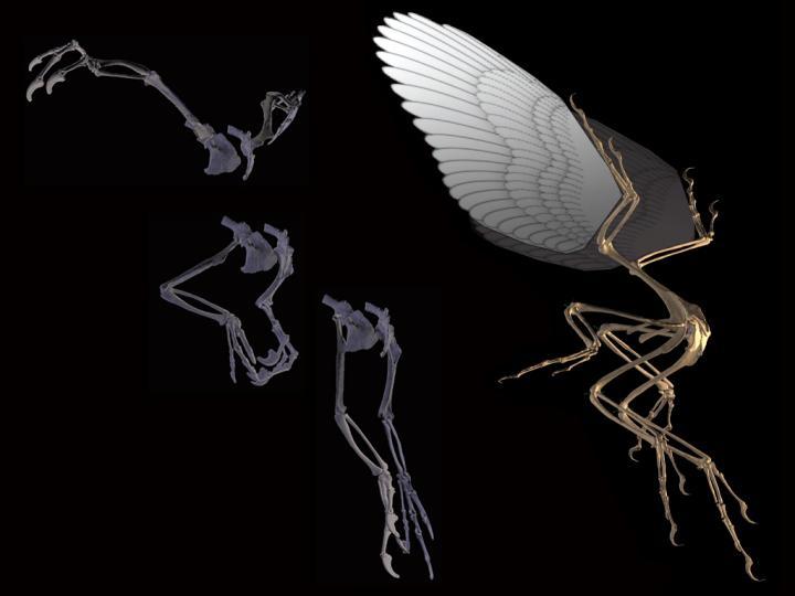 Digitized Archaeopteryx