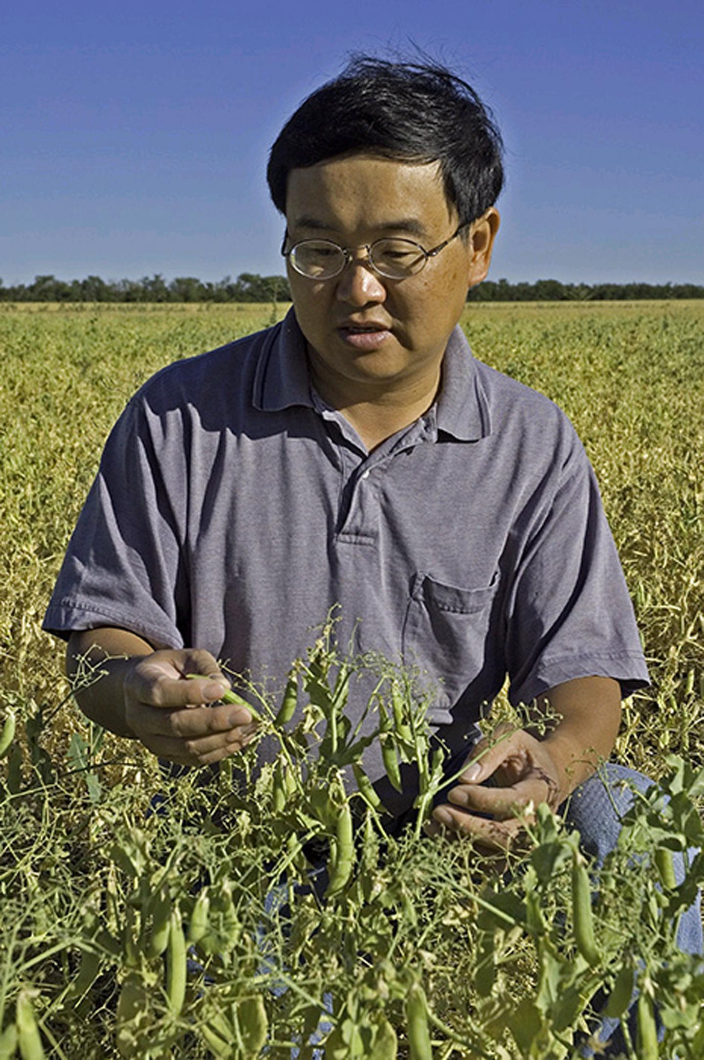 Chen in Montana Pea Field