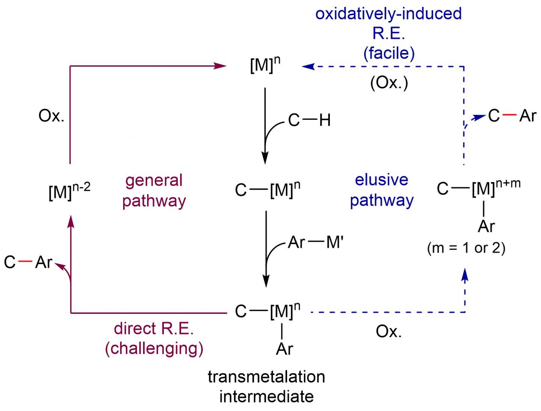 Reaction Pathway