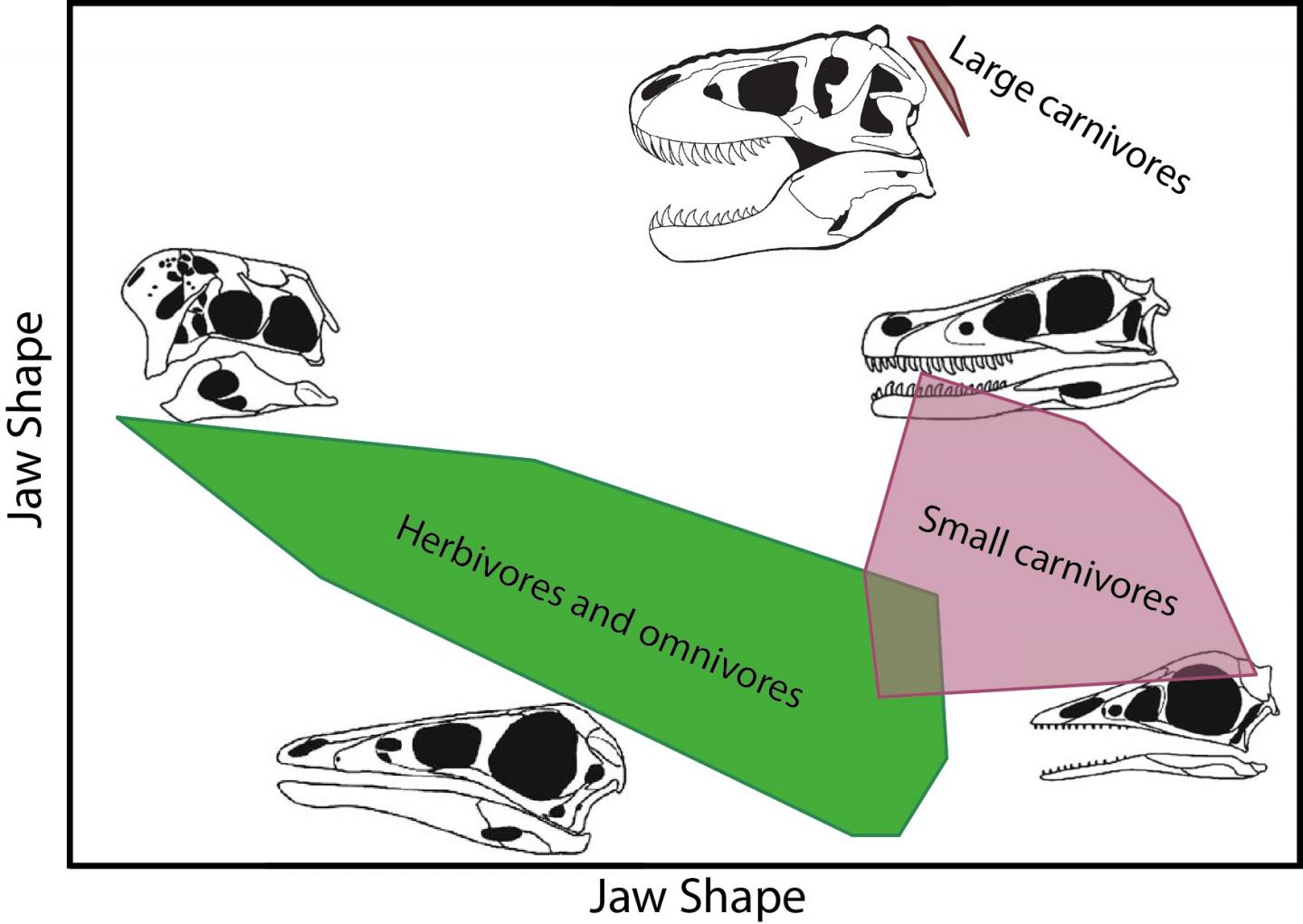 Diagram Shows the Diversity of Skull Shapes in the Meat-Eating Dinosaurs