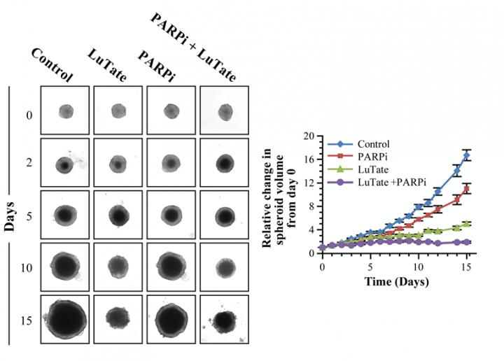 Lu-177-octreotate PRRT by PARP Inhibitors in a 3-D Spheroid Model
