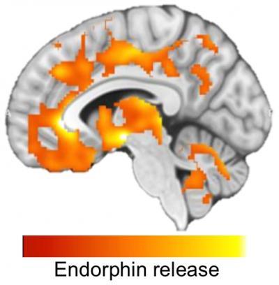Endorphin Release