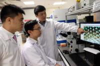 (L-R) Asst Prof Xu Chenjie, Dr Than Aung, Prof Chen Peng discussing a microscope image of the microneedle patch