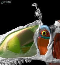 <i>Allosaurus</i> and Kestrel