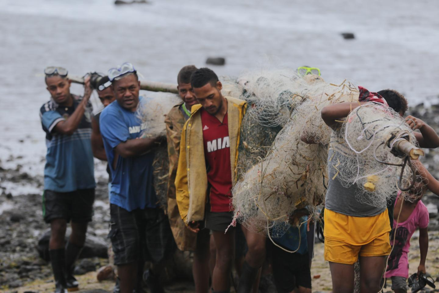 Fishers from Koro Island, Fiji, Hauling in the Catch after a Fish Drive during a Periodic Harvest