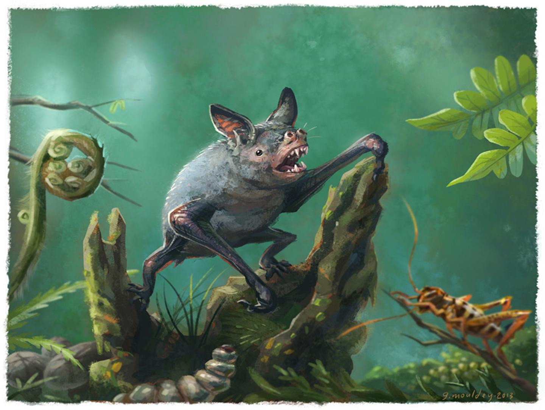 Illustration of a NZ Burrowing Bat