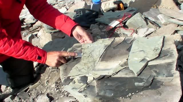 Fossil Shark