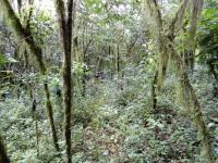 Coffee shrubs in the forest systems
