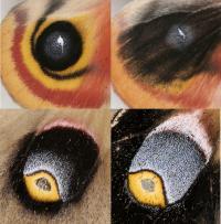 Heparin Changed Eyespots on Moth Wings in Distinct Ways