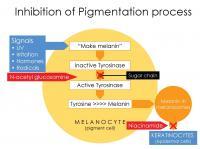Inhibition of Pigmentation Process