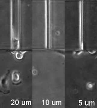 The Deformability of the Cell Nuclei Is a Limiting Factor for Cell Invasion
