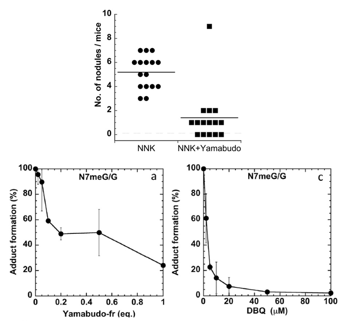 Top. Incidence of lung nodules of the left lung lobe in NNK-treated mice without any drug (left) and with Yamabudo juice (right)