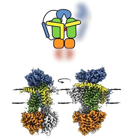 The structure of ABC transporter OpuA